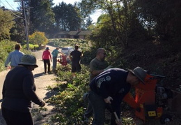 community work project bush trimming fall 2016 09