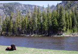 yellowstone national park may 2014 0005