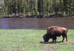 yellowstone national park may 2014 0007