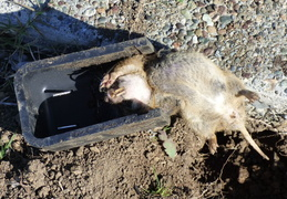 gopher kill march 26th 2015 backyard 2