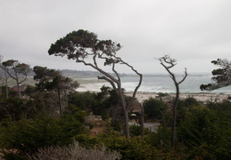 asilomar july 2010 031