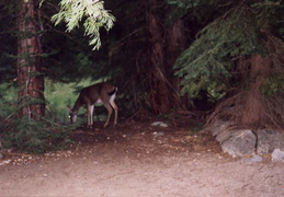 trinity alps backpacking 2003 29