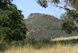 Mt_Diablo_Donner_Canyon_April_2008