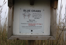 blue crabs limits