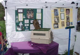 wildcat canyon wildlife show 039