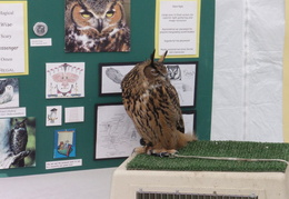 wildcat canyon wildlife show 041