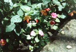 butterfly world 1992 03