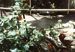 butterfly world 1992 06