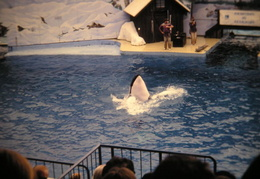 marine world 2003 031