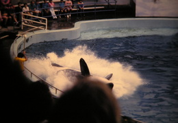 marine world 2003 039