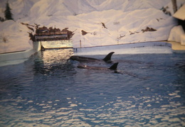 marine world 2003 044